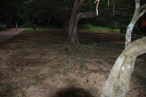 宋氏祖居 - 北大荒之树 - 北大荒人