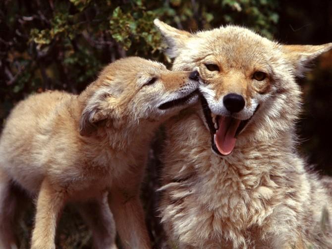 ~绝美的动物组图~ - wps3416257wps - wps3416257wps的博客
