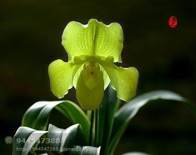 兰心蕙质—兰秋香风远 - 逍遥翁 - 逍遥翁的博客