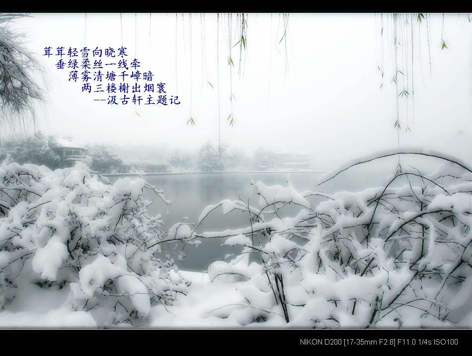 原创:七绝-雪景 文/尔夫  - 易安君 - 易安君的博客