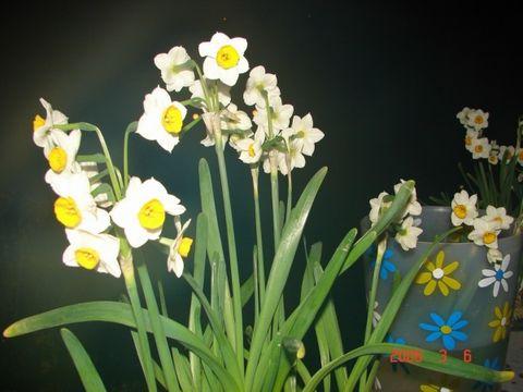 (原创)散文:        徜徉在花间 - 听雨赏雪        大李  - 听雨赏雪的博客