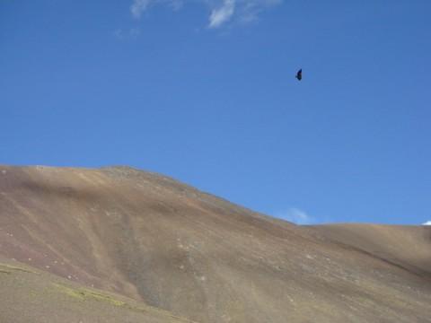 西藏归来摄影下列之 西藏的鹰 - 梁赤 - 梁赤的博客