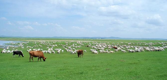 陪你一起看草原 - 。.| ↙`蕶誶哋、庝。ゞ☆ - 蕶誶哋、庝。   博客