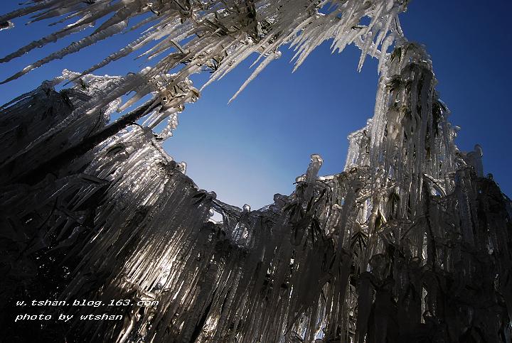 (原创)难得一见的冻竹 - 身东影西 - 身东影西