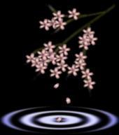 精美边框(4) - 陶子 - 陶子的博客