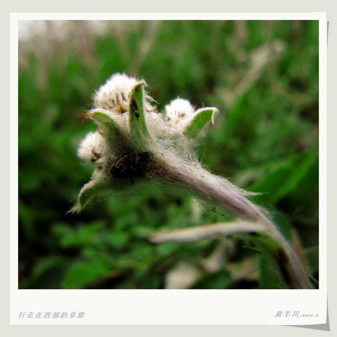 西部故事.刘志娟的作文.《草》 - 行走在西部的草原 - 行走在西部的草原