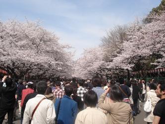 和网友们在东京看樱花!【原创】
