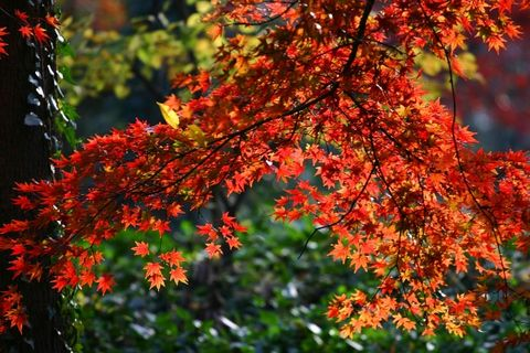 霜叶红于二月花 - 江南风 - 江南风博客