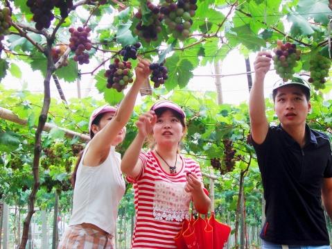 我国休闲观光农业发展策略及前景展望 - 清扬 - 花果飘香