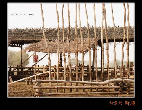 [原创图文]一个陌生的地方——罗布泊人的村寨 - MOMO - MOMO 的博客