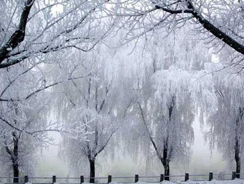 """""""冬天里的春天""""这是对吉林雾凇诗情画意般的美的最好描绘."""