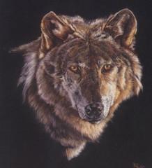 我是狼 - fa9702 - fa9702的博客