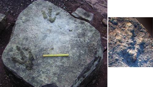 中美学者在云南发现我国最古老肉食恐龙足迹 - 邢立达 - 邢立达的恐龙频道