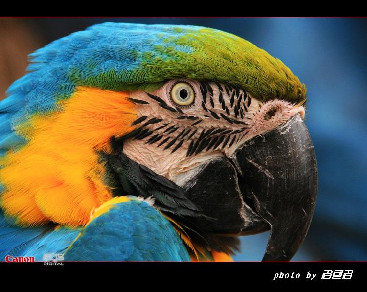 【转载】引用 腾龙18-250镜头在大连鸟语林拍鸟的表现【原创摄影】40片 - 欣然 - 博海浪花