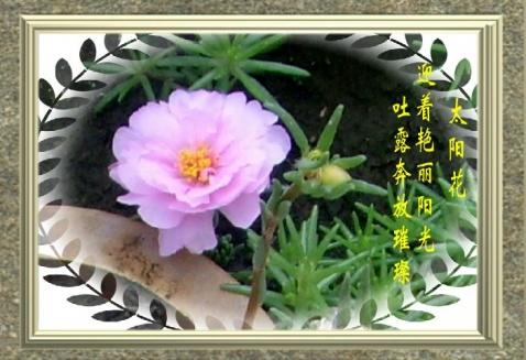 太阳花【原创】 - 憨憨 - 寻春