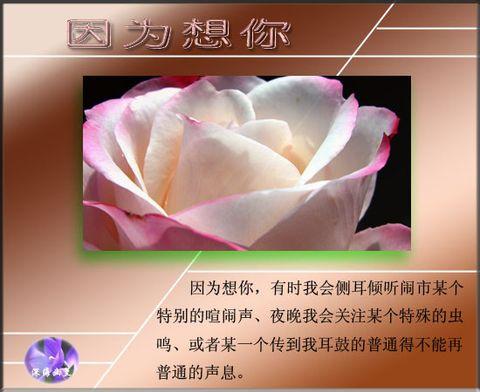 因为想你 - 白玫瑰 - 沁韵玫园