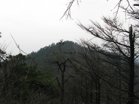 登顶青虎湾岗 - 江村一老头 - 江村一老头的茅草屋