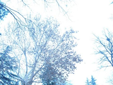 即将消逝的影像 - 安西千岁 - 千岁之森