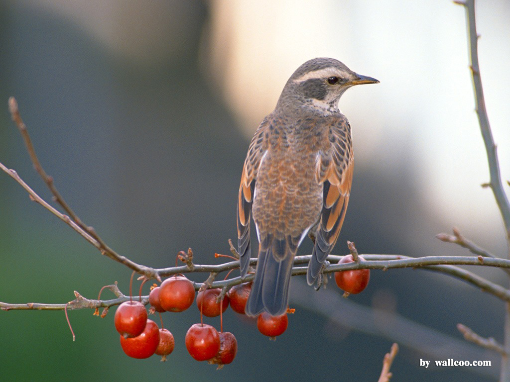 可爱的鸟类