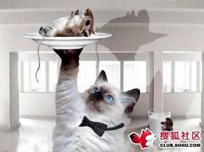 引用 等猫有了钱 - 極地追夢 - 追夢飛龍