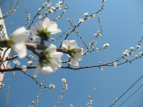 [原创]感受春的妩媚 - 傻丫头--雪儿 - 雪儿