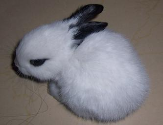 儿子四年级作文之《小兔子》