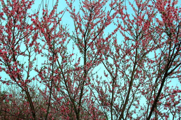 春色无限的金亚生态艺术园