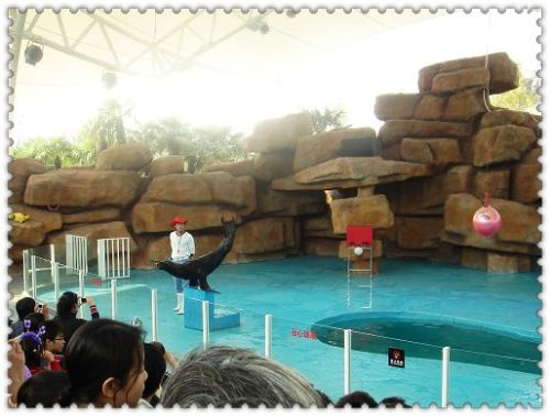 常州恐龙园 看海狮的精彩表演