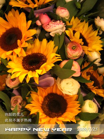 向阳花 - melody.dd - 华丽的D调