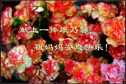 原创:七绝·节日祭母 (新韵、插图) - 芳  草  美  人 - 芳 草 美 人