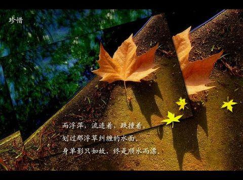 "引用沉静如水的""秋绪"" - 小桥潺潺 - 小桥潺潺"