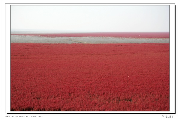天下奇观红海滩【原创】 - 心情驿站(阿文) - 心情驿站【阿文】