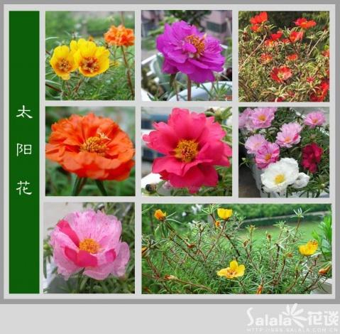 如此美丽 - zhaoyananlver11 - 我的博客我的小家