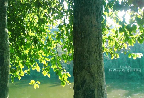 【原创】_我的手机摄影 - 柠檬棒棒糖 - 柠檬棒棒糖的田园