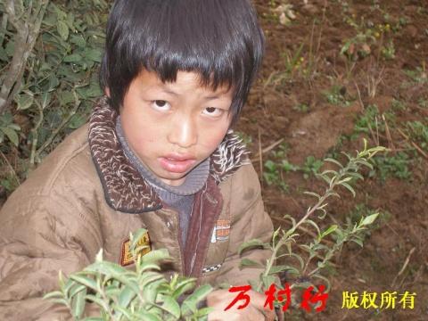 """万村行日记8637元钱与10岁的放牛娃 - 蔚然 - """"万村行""""无偿帮扶农民-脱贫、解困、发展"""