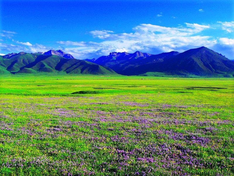 【加贝原创】]美丽巴塘-野花锦簇 - 大成 - 大成—蓝色的梦博客