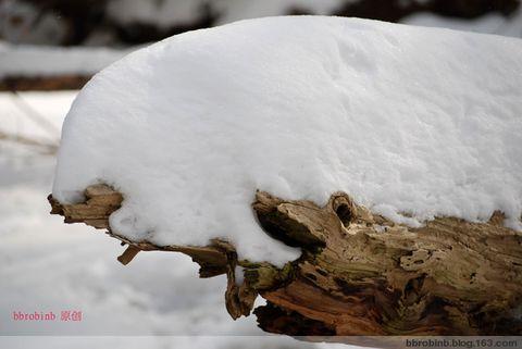 雪 中 情 - bbrobinb - 情 如 白 雪 .......【原创】