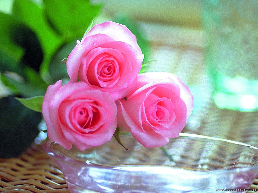 爱上粉红色 - 微风吹磐石 - weiwei.43 的博客