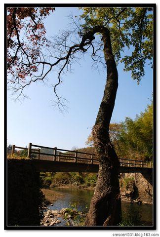 枫舞秋风 层林尽染-记从化古影线徒步 - 紫藤秋水 - LifeHiking