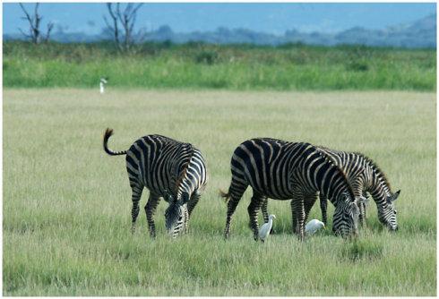 狂野东非-坦桑尼亚《一》 - Y哥。尘缘 - 心的漂泊-Y哥37国行