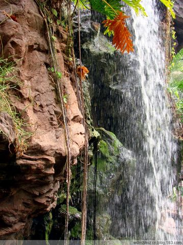 热带植物园(1)——热带雨林 - MOMO - MOMO的博客