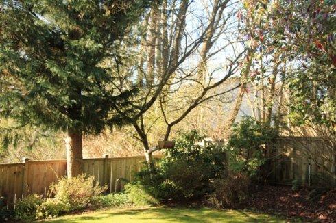 我的後院 - 焦恩俊 - 焦恩俊的博客