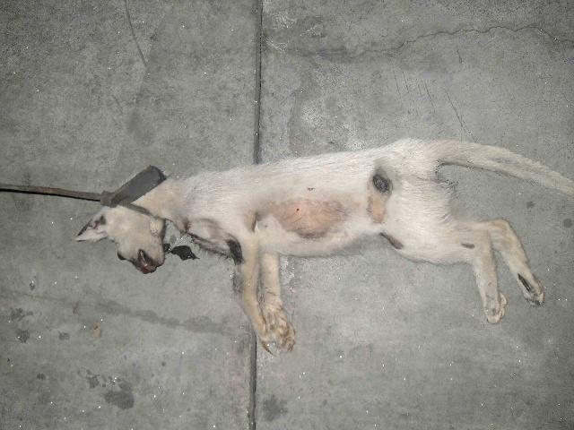 海南省小动物保护协会要求