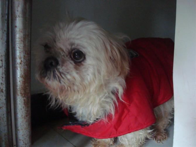"""希望大家帮帮我们广元市最漂亮、最善良、最伟大的""""狗妈妈""""  - 广元市博爱动物保护中心 - 广元市博爱动物保护中心"""
