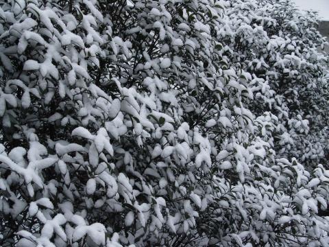 美 丽 的 雪 景 - 欣怡 - 欣怡乐园  开心驿站