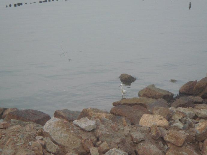 深圳红树林(二)鸟类自然保护区