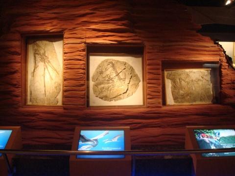 【引用】山西博物院——古脊椎动物展 - 漪汾夕照 - 漪汾夕照