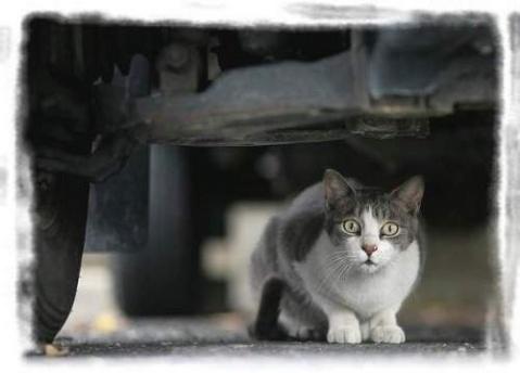 流浪猫 - 荫子 - 倾听夜色