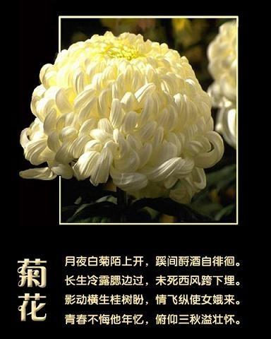 精美圖文欣賞21 - 唐老鴨(kenltx) - 唐老鴨(kenltx)的博客