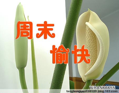 梦的美好 - 汤洪高 - 汤洪高个人主页